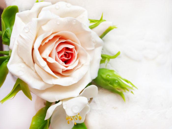 Cream Rose Hair Clip 2