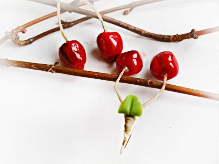Cherry Dangle Earrings 1