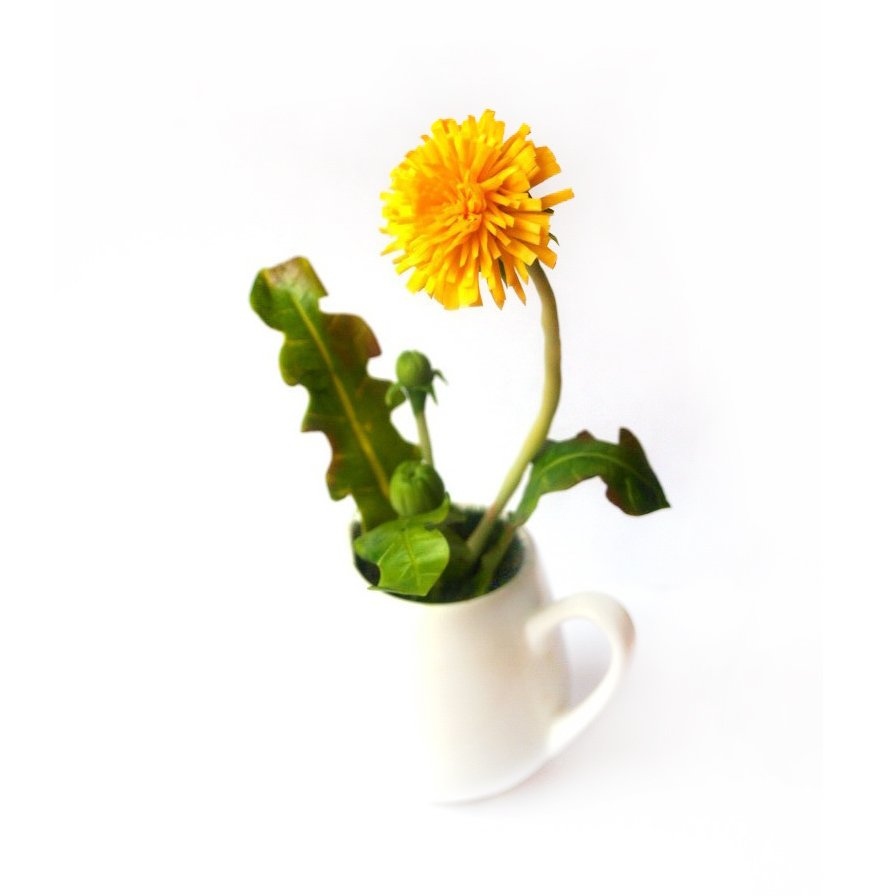 Flower Decoration Artificial Dandelion In Milk Jug Oriflowers