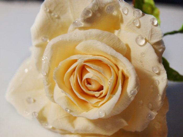 Rose Hair Pin 1 | Oriflowers